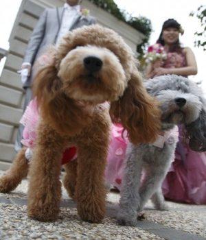 結婚式当日に出来そうもないことも前撮りなら叶います