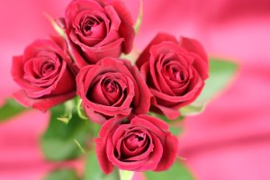 バラの中でもっとも珍しい色・・・?