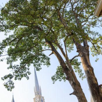 大聖堂とシンボルツリー